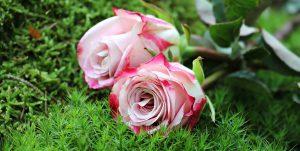 Otwieramy kwiaciarnię: co trzeba kupić?