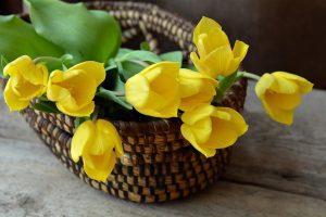 Tulipany – jedne z najbardziej popularnych kwiatów w kwiaciarniach