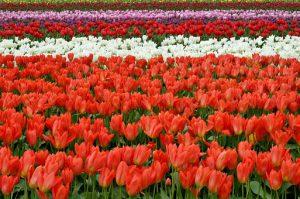 Zakładamy kwiaciarnie