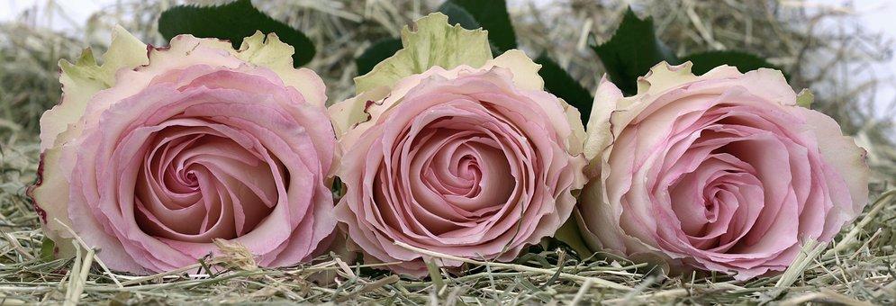 Kwiaciarnia: Biznes usłany różami?