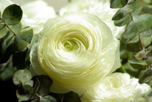 Wyślij kwiaty swojej ukochanej