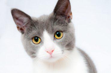 Jakich artykułów potrzebujesz, gdy zamieszka z tobą kot?